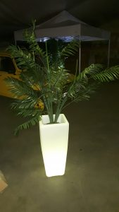 Pot lumineux avec palmier